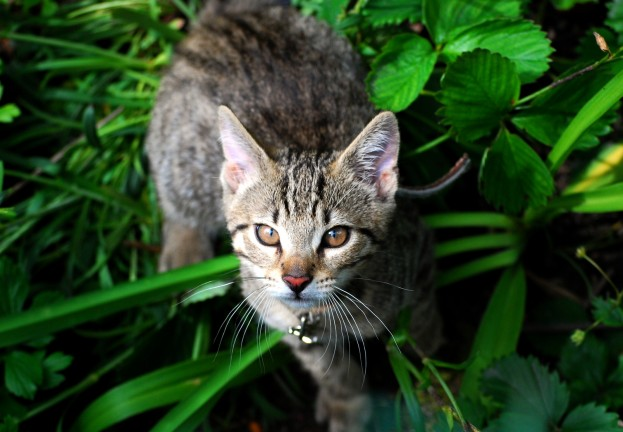 Stray cat used as bait in Japanese hacking plot