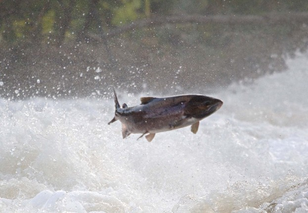 Catch me if you can: Can we predict who will fall for phishing emails?