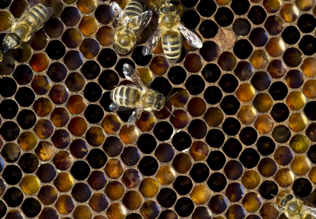 'Honey Encryption' foils hackers with false positive data