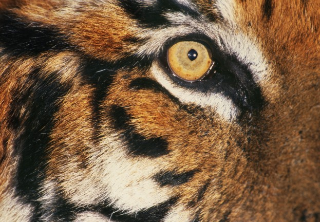 WWF warns of 'arms race' with 'cyberpoachers' targeting endangered species