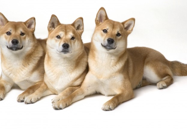 "Dogecoin vault vanishes after attack – and ""mysterious withdrawals"""