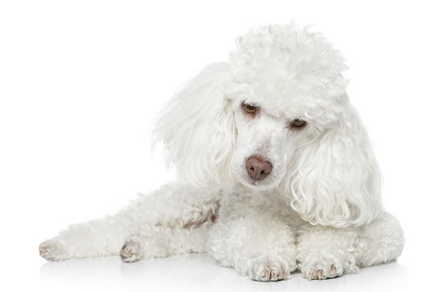 POODLE Attack – Google uncovers major flaw in SSL 3.0