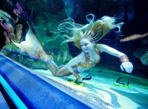 Mermaid appears at Blue Planet Aquarium in Cheshire Oaks, Cheshire, Britain - 20 Oct 2013