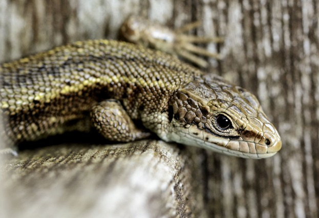 Lizard Squad DDoS‑for‑hire service hacked – users' details revealed