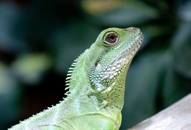 LizardStresser: Six people arrested in connection with Lizard Squad's DDoS attack tool